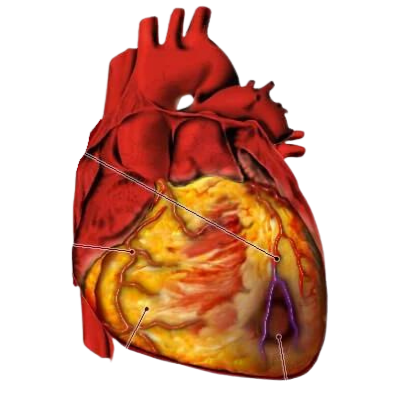 https://www.paramounthospital.in/vascular-and-endovascular-hospital-in-siliguri/